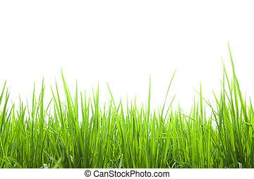 frais, blanc, herbe, vert, isolé