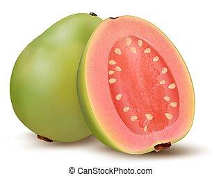 frais, fruit., goyave, vert, vector.