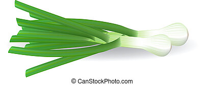 frais, vecteur, vert, illustration., onions.