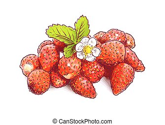 fraise sauvage, flower.