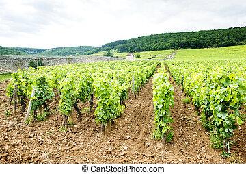 franc, nuits, vignobles, de, cote, bourgogne