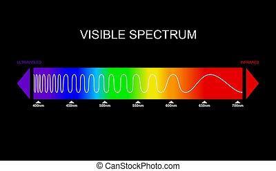 frequency., spectre, électromagnétique, humain, ultraviolet., infrarouge, visible, couleur, vecteur, spectre, portion, eye., vague, lumière, diagram.