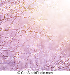 fruit, fleurir, arbre