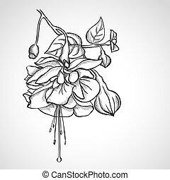 fuchsia, fleurs, croquis