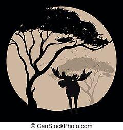 fullmoon, élan, silhouette, scène, nuit