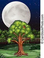 fullmoon, nuit, arbre, scène, nature