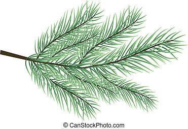 fur-tree, vecteur, branche
