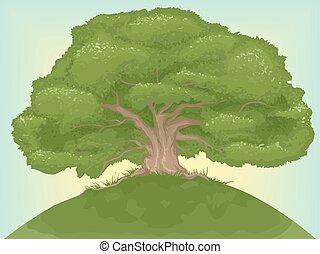 géant, arbre