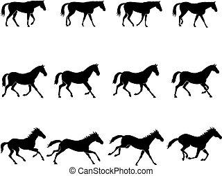 gaits, cheval