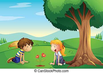 garçon, plante, grandir, girl, regarder