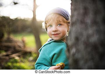 garçon, printemps, nature., arbre, derrière, dehors, enfantqui commence à marcher, dissimulation, heureux
