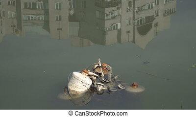 garbage., lac, déchets, flotter