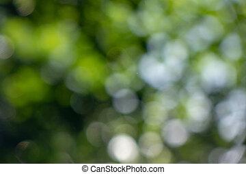 garden., beau, naturel, été, feuilles, bokeh, arrière-plan vert, dehors, disposition
