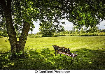 garez banc, arbre, sous