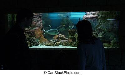 gens, aquarium, regarder, fish