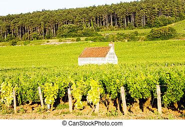 gevrey-chambertin, nuits, de, france, vignobles, cote, bourgogne