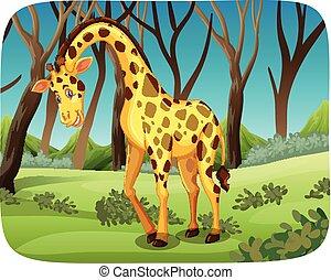 girafe, forêt
