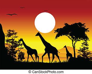 girafe, silhouette, beauté, famille