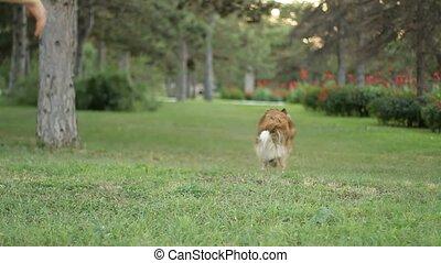 girl, parc, chien, trainer.