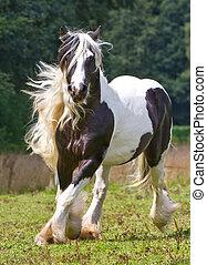 gitan, cheval