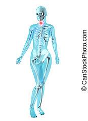 gorge, douleur, -, femme, anatomie