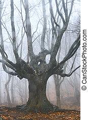 grand arbre, forêt, mort, brumeux