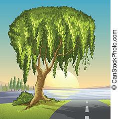 grand arbre, route