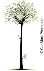 grand, arbre