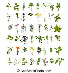 grand, aromate, fleur, feuille, collection