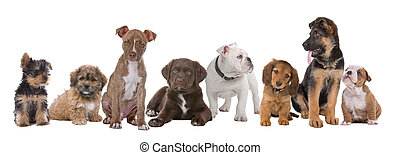 grand, chiots, groupe