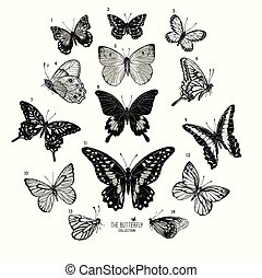 grand, collection, papillons