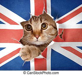 grand, haut, britannique, chat, regarder, drapeau, papier, par, trou, grande-bretagne
