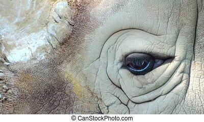 grand plan, rhinocéros