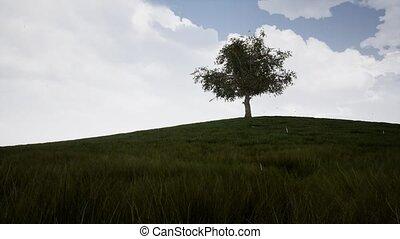 grand, projection, timelapse, arbre, temps, 4, pendant, saisons