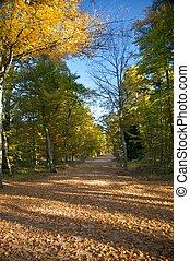grand, sentier, automne, parc
