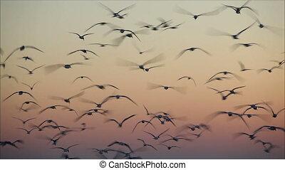 grand, soir, voler, ciel, nombre, mouettes, 1, contre