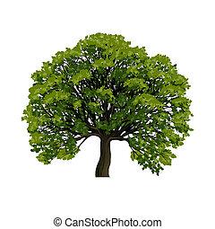 grand, symbole, vecteur, arbre vert