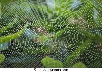 grand, toile, centre, araignés
