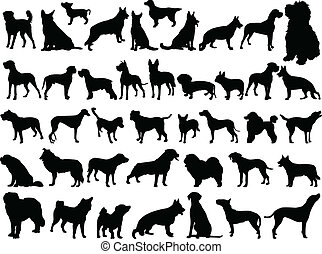 grand, vecteur, -, chiens, collection