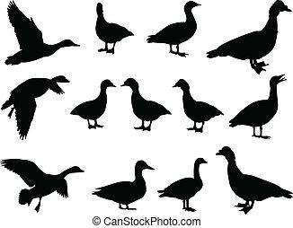 grand, vecteur, -, collection, canard
