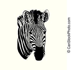 graphique, illustration, main, vecteur, zebra, fond, dessiné, blanc