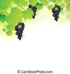 grapvine, raisins