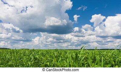 grass., ciel, défaillance, vert, temps, frais, beau