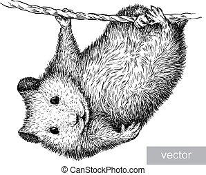 graver, hamster, illustration