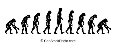 gravure, évolution, théorie, vendange, man., singe