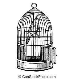gravure, illustration, vecteur, canari, mettez cage oiseau