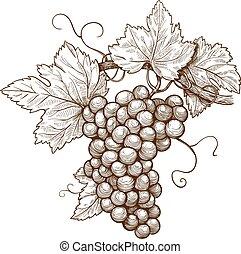 gravure, raisins, branche