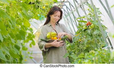 greenhouse., légumes, temps, panier, récolte, verdure, femme, jeune