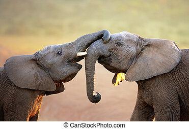 (greeting), éléphants, doucement, toucher, autre, chaque
