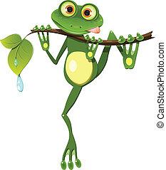 grenouille, branche